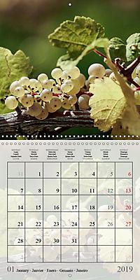 Riesling Grapes (Wall Calendar 2019 300 × 300 mm Square) - Produktdetailbild 1