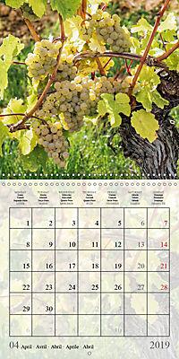 Riesling Grapes (Wall Calendar 2019 300 × 300 mm Square) - Produktdetailbild 4