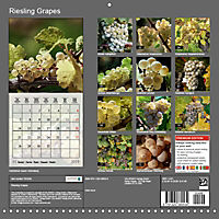 Riesling Grapes (Wall Calendar 2019 300 × 300 mm Square) - Produktdetailbild 13