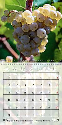 Riesling Grapes (Wall Calendar 2019 300 × 300 mm Square) - Produktdetailbild 9