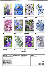 Rittersporn (Wandkalender 2019 DIN A2 hoch) - Produktdetailbild 13