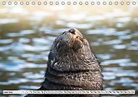Robben - Halbstarke an Land (Tischkalender 2019 DIN A5 quer) - Produktdetailbild 6