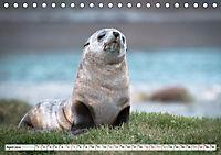 Robben - Halbstarke an Land (Tischkalender 2019 DIN A5 quer) - Produktdetailbild 4