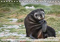 Robben - Halbstarke an Land (Tischkalender 2019 DIN A5 quer) - Produktdetailbild 2