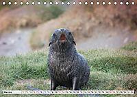 Robben - Halbstarke an Land (Tischkalender 2019 DIN A5 quer) - Produktdetailbild 5