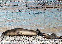 Robben - Halbstarke an Land (Tischkalender 2019 DIN A5 quer) - Produktdetailbild 10