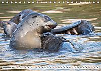 Robben - Halbstarke an Land (Tischkalender 2019 DIN A5 quer) - Produktdetailbild 9