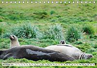 Robben - Halbstarke an Land (Tischkalender 2019 DIN A5 quer) - Produktdetailbild 11