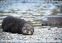 Robben - Halbstarke an Land (Tischkalender 2019 DIN A5 quer) - Produktdetailbild 12