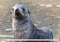 Robben - Halbstarke an Land (Tischkalender 2019 DIN A5 quer) - Produktdetailbild 8