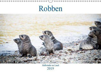 Robben - Halbstarke an Land (Wandkalender 2019 DIN A3 quer), Nadja Siegl