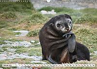 Robben - Halbstarke an Land (Wandkalender 2019 DIN A3 quer) - Produktdetailbild 2