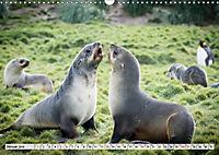 Robben - Halbstarke an Land (Wandkalender 2019 DIN A3 quer) - Produktdetailbild 1