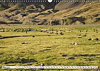 Robben - Halbstarke an Land (Wandkalender 2019 DIN A3 quer) - Produktdetailbild 3