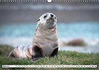 Robben - Halbstarke an Land (Wandkalender 2019 DIN A3 quer) - Produktdetailbild 4