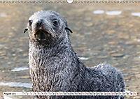Robben - Halbstarke an Land (Wandkalender 2019 DIN A3 quer) - Produktdetailbild 8