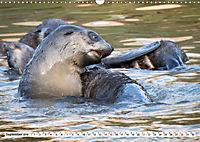 Robben - Halbstarke an Land (Wandkalender 2019 DIN A3 quer) - Produktdetailbild 9