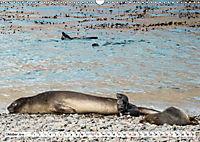 Robben - Halbstarke an Land (Wandkalender 2019 DIN A3 quer) - Produktdetailbild 10