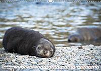 Robben - Halbstarke an Land (Wandkalender 2019 DIN A3 quer) - Produktdetailbild 12