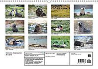 Robben - Halbstarke an Land (Wandkalender 2019 DIN A3 quer) - Produktdetailbild 13