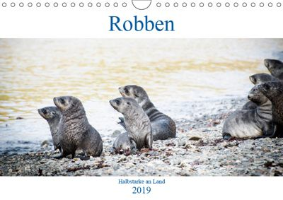 Robben - Halbstarke an Land (Wandkalender 2019 DIN A4 quer), Nadja Siegl