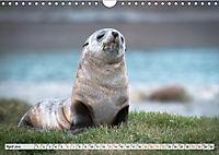 Robben - Halbstarke an Land (Wandkalender 2019 DIN A4 quer) - Produktdetailbild 4
