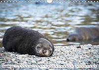 Robben - Halbstarke an Land (Wandkalender 2019 DIN A4 quer) - Produktdetailbild 12