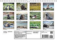 Robben - Halbstarke an Land (Wandkalender 2019 DIN A4 quer) - Produktdetailbild 13