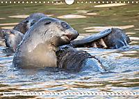 Robben - Halbstarke an Land (Wandkalender 2019 DIN A4 quer) - Produktdetailbild 9