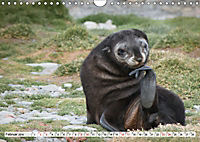 Robben - Halbstarke an Land (Wandkalender 2019 DIN A4 quer) - Produktdetailbild 2