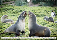 Robben - Halbstarke an Land (Wandkalender 2019 DIN A4 quer) - Produktdetailbild 1