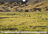Robben - Halbstarke an Land (Wandkalender 2019 DIN A4 quer) - Produktdetailbild 3