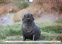 Robben - Halbstarke an Land (Wandkalender 2019 DIN A4 quer) - Produktdetailbild 5