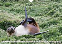 Robben - Halbstarke an Land (Wandkalender 2019 DIN A4 quer) - Produktdetailbild 7