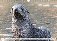 Robben - Halbstarke an Land (Wandkalender 2019 DIN A4 quer) - Produktdetailbild 8