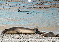 Robben - Halbstarke an Land (Wandkalender 2019 DIN A4 quer) - Produktdetailbild 10