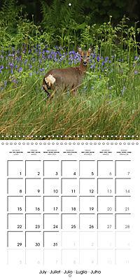Roe deer (Wall Calendar 2019 300 × 300 mm Square) - Produktdetailbild 7
