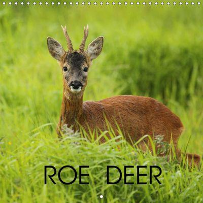 Roe deer (Wall Calendar 2019 300 × 300 mm Square), Linda Mellor