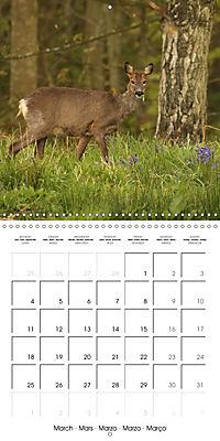 Roe deer (Wall Calendar 2019 300 × 300 mm Square) - Produktdetailbild 3