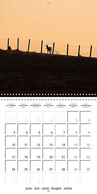 Roe deer (Wall Calendar 2019 300 × 300 mm Square) - Produktdetailbild 6