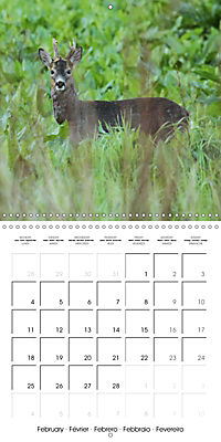 Roe deer (Wall Calendar 2019 300 × 300 mm Square) - Produktdetailbild 2
