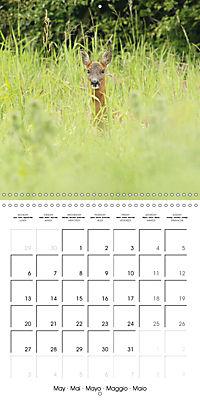 Roe deer (Wall Calendar 2019 300 × 300 mm Square) - Produktdetailbild 5