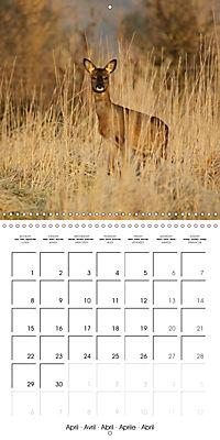 Roe deer (Wall Calendar 2019 300 × 300 mm Square) - Produktdetailbild 4