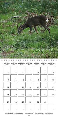 Roe deer (Wall Calendar 2019 300 × 300 mm Square) - Produktdetailbild 11
