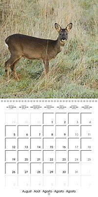 Roe deer (Wall Calendar 2019 300 × 300 mm Square) - Produktdetailbild 8