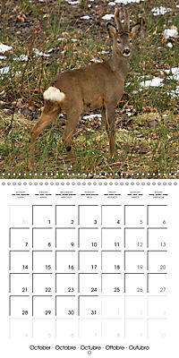 Roe deer (Wall Calendar 2019 300 × 300 mm Square) - Produktdetailbild 10