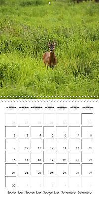 Roe deer (Wall Calendar 2019 300 × 300 mm Square) - Produktdetailbild 9