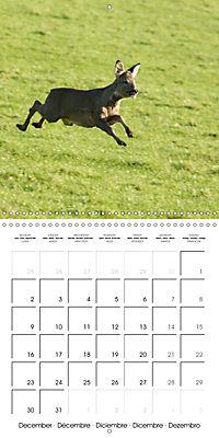 Roe deer (Wall Calendar 2019 300 × 300 mm Square) - Produktdetailbild 12