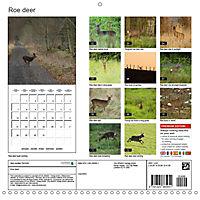 Roe deer (Wall Calendar 2019 300 × 300 mm Square) - Produktdetailbild 13