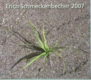 Romantik 2007, Erich Schmeckenbecher